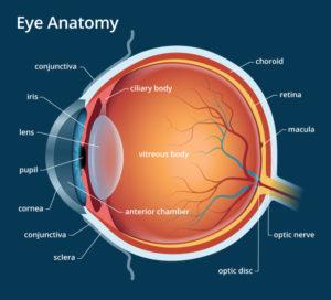 Eye Anatomy: Parts of the Eye